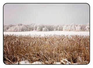 Hoar frost1